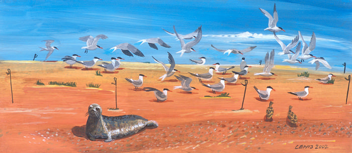 Bird Art Prints by Brian Lewis, Tern The Noise Down