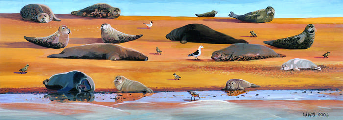 Seal Art Prints by Brian Lewis, Seals on Blakeney Point